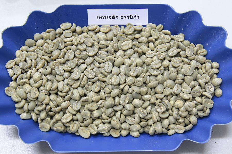 กาแฟสารเทพเสด็จอราบิก้า