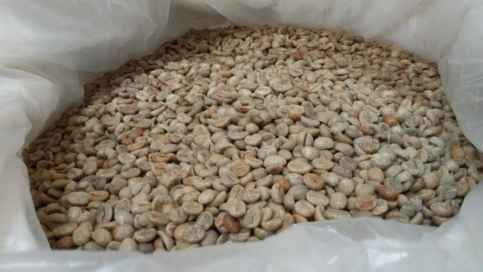 กาแฟฮันนี่โพรเซส Honey Process 2