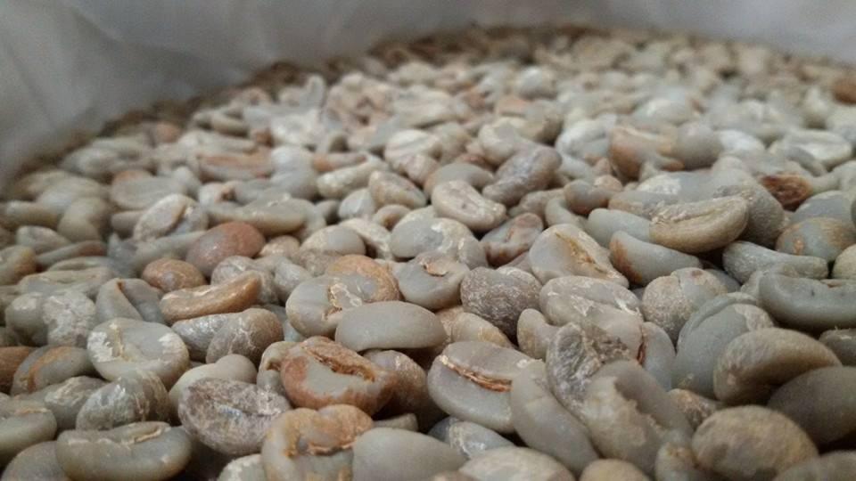 กาแฟฮันนี่โพรเซส Honey Process 3