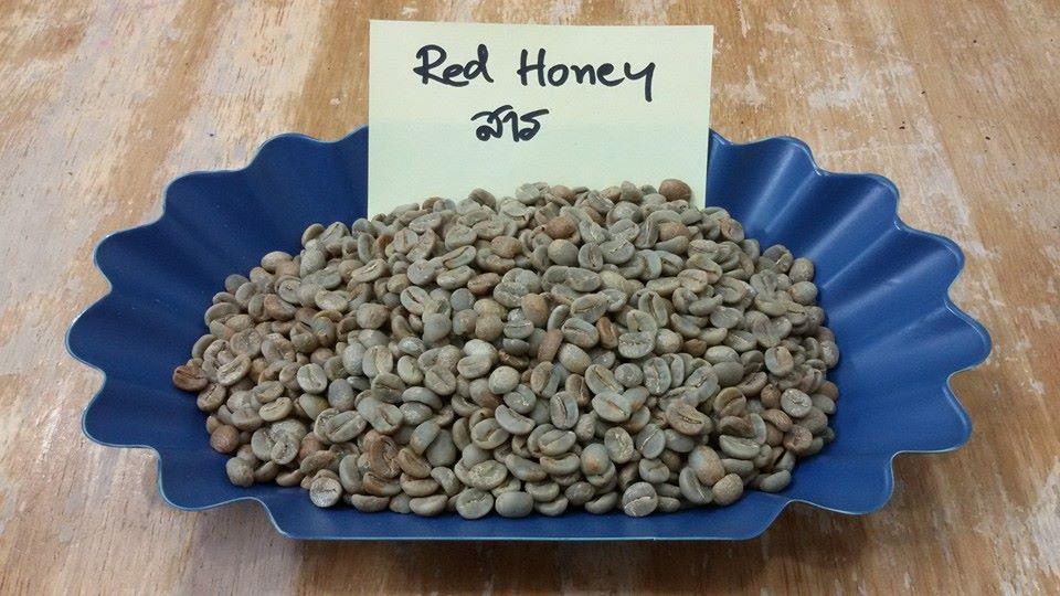 กาแฟฮันนี่โพรเซส Honey Process 4