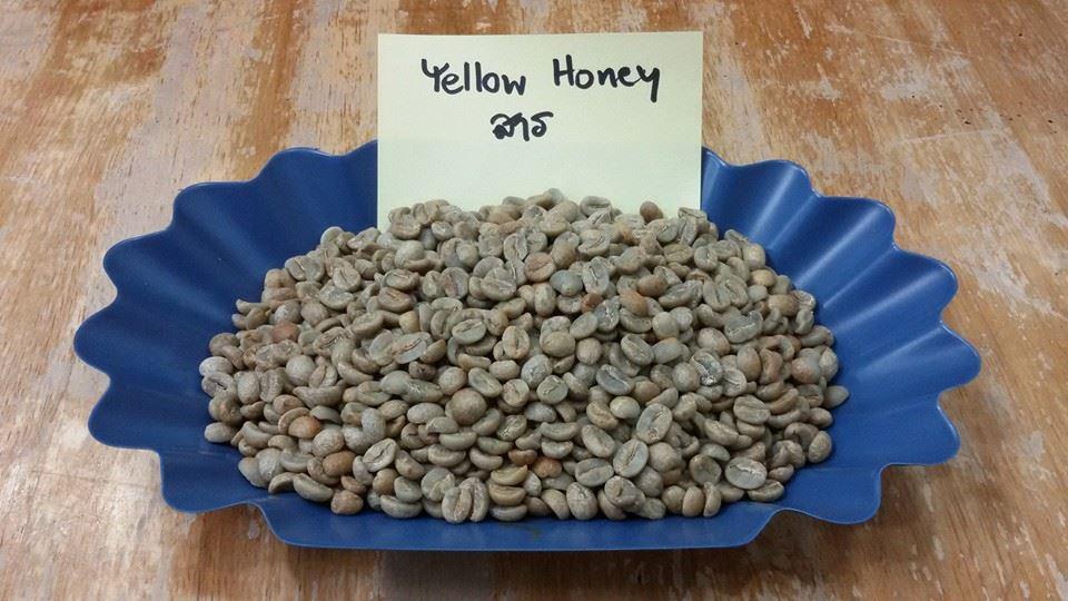 กาแฟฮันนี่โพรเซส Honey Process 6