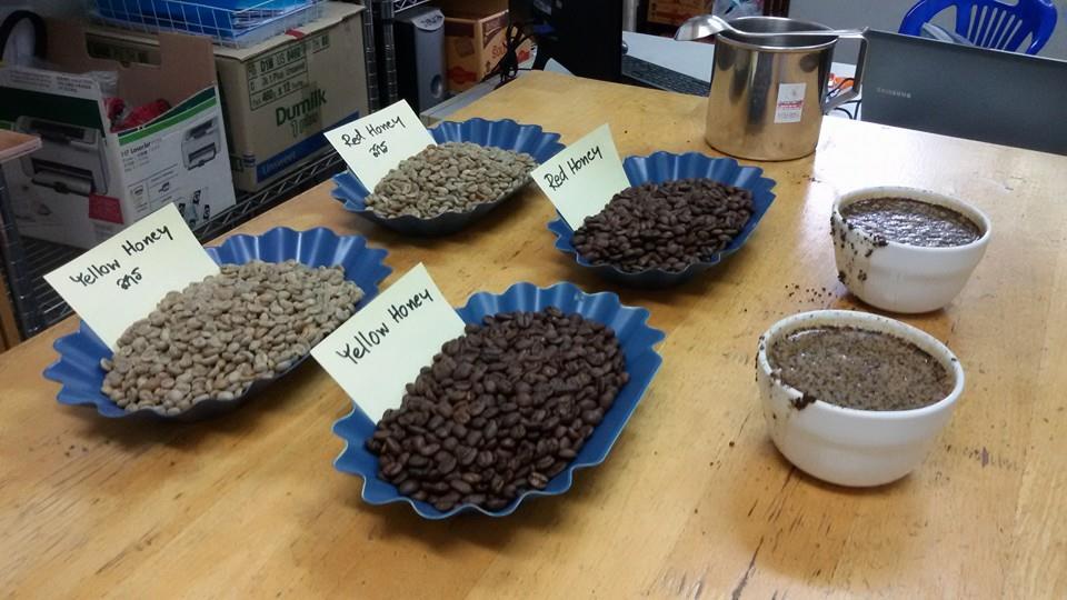 กาแฟฮันนี่โพรเซส Honey Process 8
