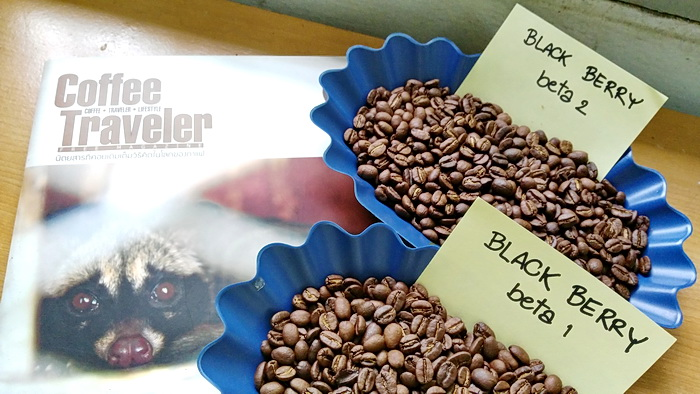 เมล็ดกาแฟคั่ว BLACK BERRY